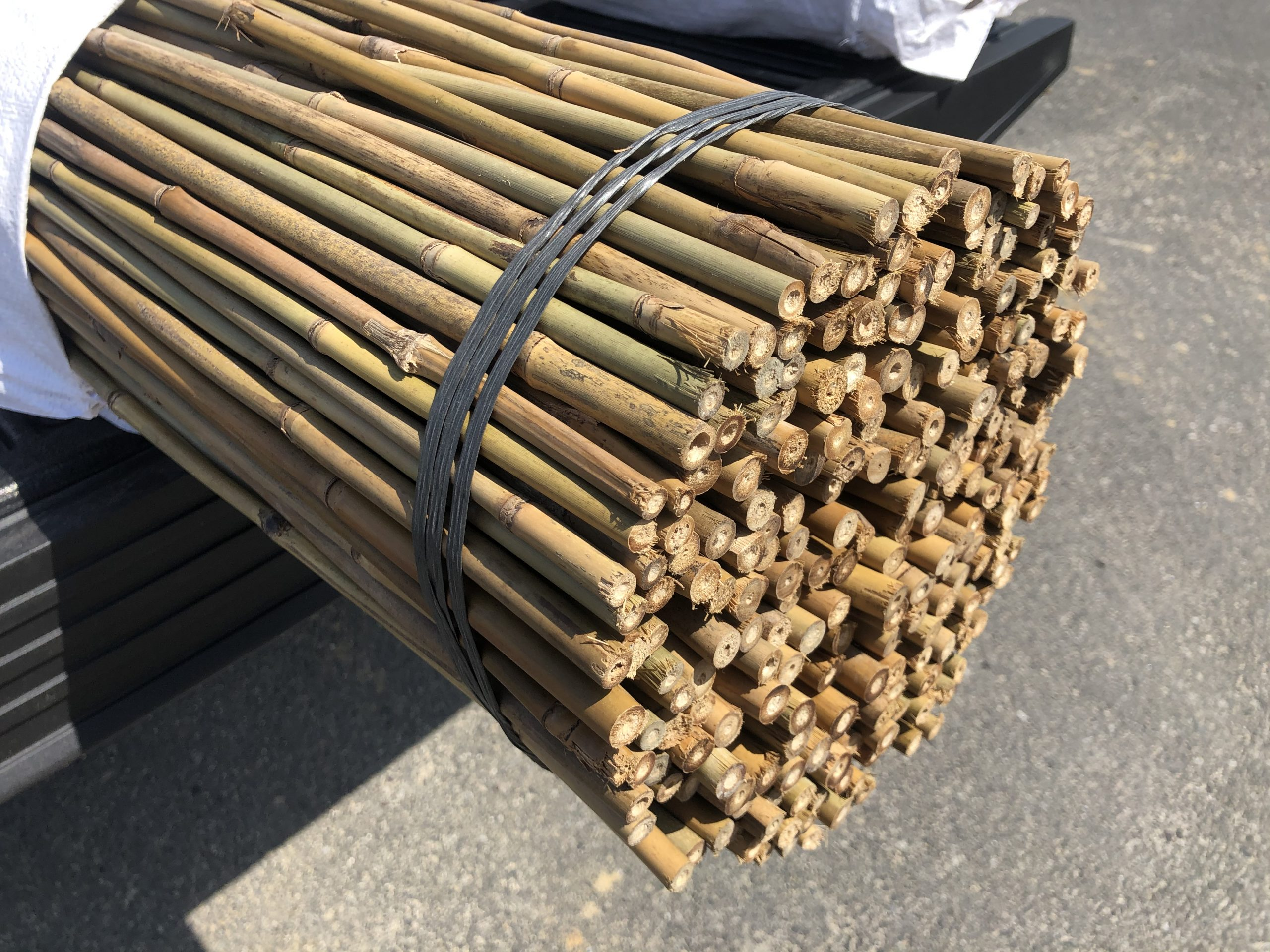 bamboo stakes #1