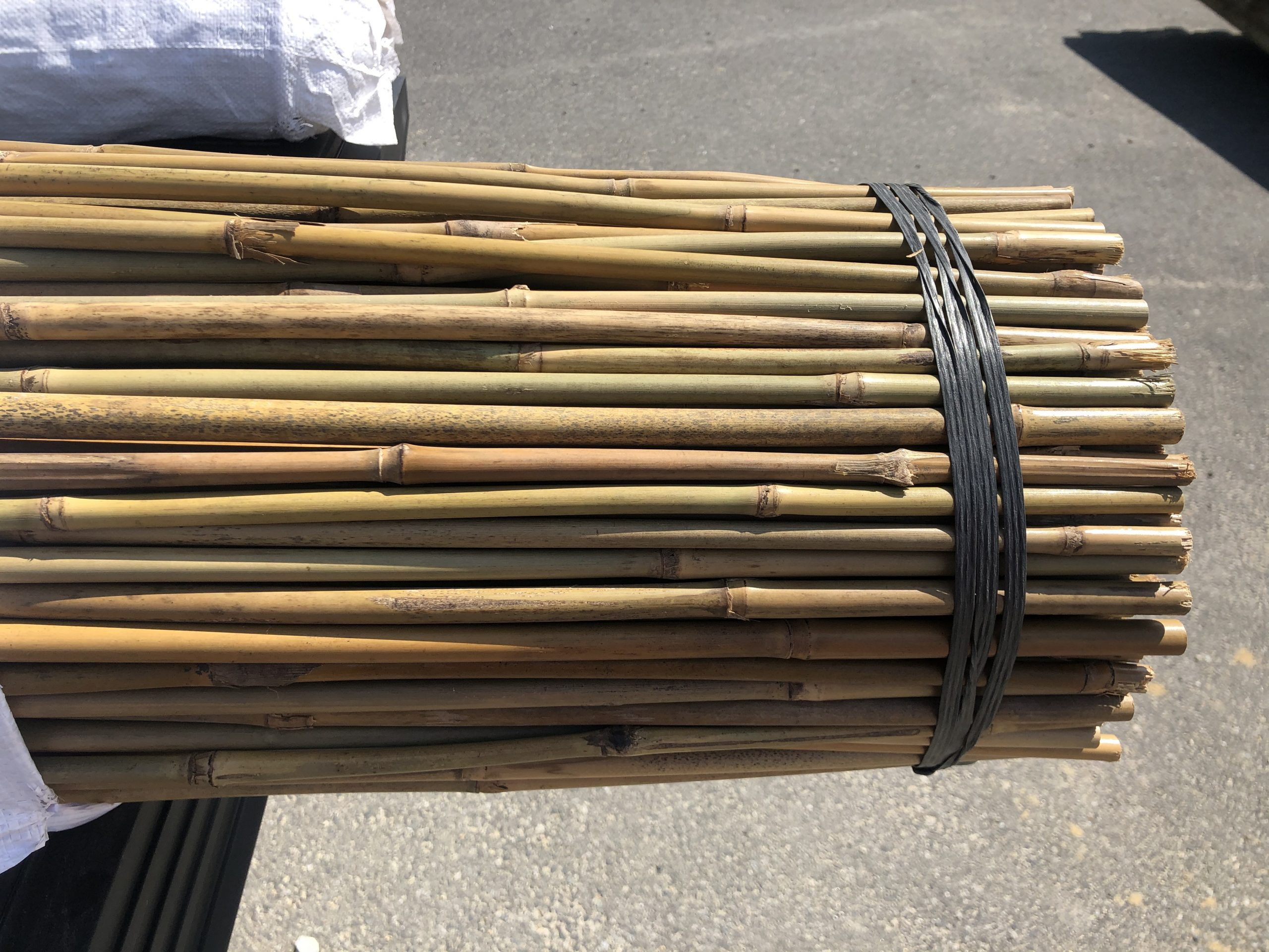 bamboo stakes #2
